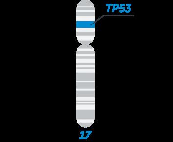 TP53 MASTR - Multiplicom