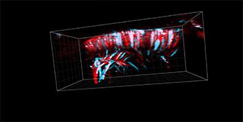 Vevo 2100 - VisualSonics FujiFilm | accela