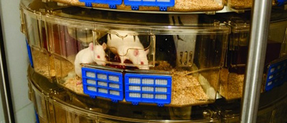 Is it possible to maintain germ-free animals on an Animal Care Systems rack? The answer is yes!