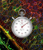 Time-lapse Microscopy